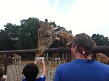 Lazy-5 g-giraffe