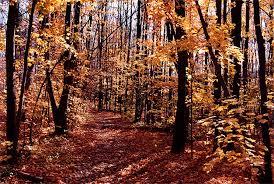 bruce-trail
